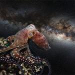 Cosmic Octopus