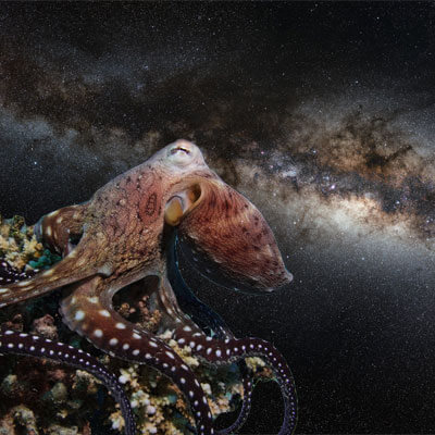 The Octopus and ET  Is intelligence an evolutionary forced move?Posted in For Your Consideration