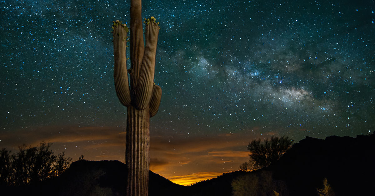 A Saguaro S Universe Building A Cactus Starts With The