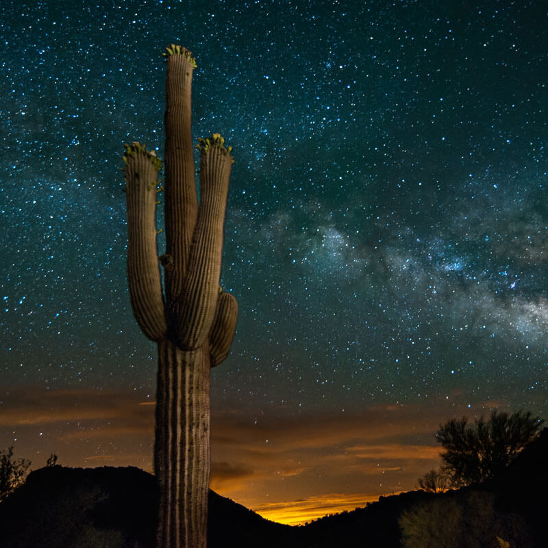A Saguaro's universe  Building a cactus starts with the Big BangPosted in For Your Consideration